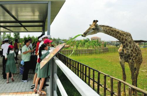 《香市动物园》